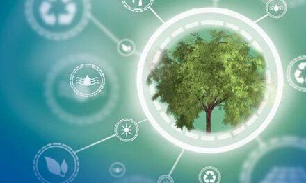 MPDV-Gruppe startet Baumpflanzaktion